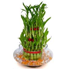 Stress Buster Plants