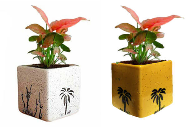 Air Purifying Plants Syngonium Mini Indoor Plant in Square Pots (Combo of 2)
