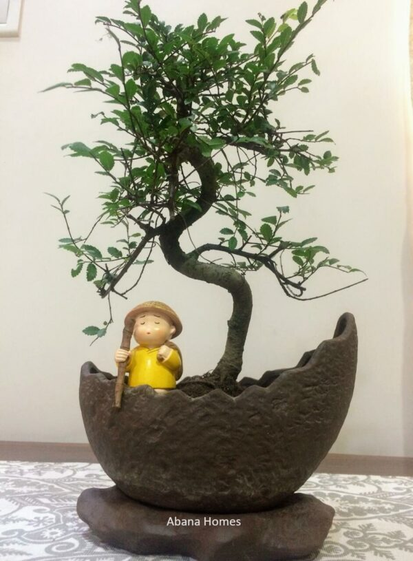 Chinese Elm Bonsai in Imported Pot & Attached Tray (5 Yrs Old)
