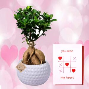 gift plant for birthday and anniversary