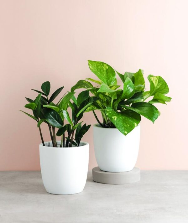 curated collection of plants